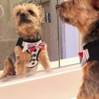 american-river-ultra-choke-free-dog-harness-tuxedo-with-4-interchangeable-bows